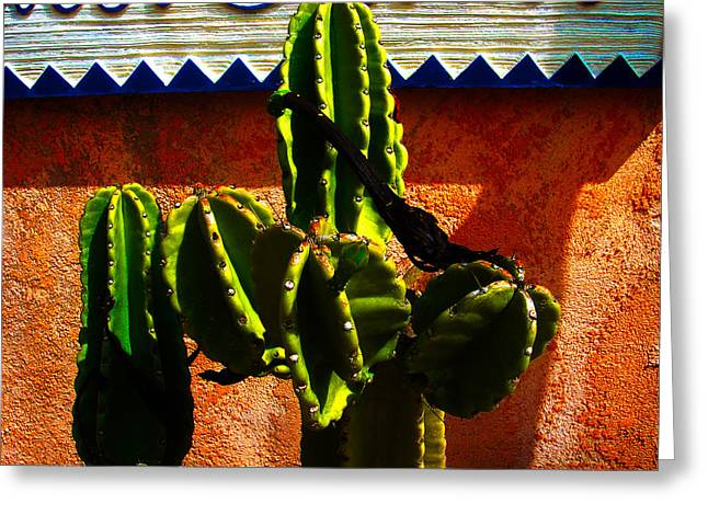 Sienna Greeting Cards - Mexican Style  Greeting Card by Susanne Van Hulst