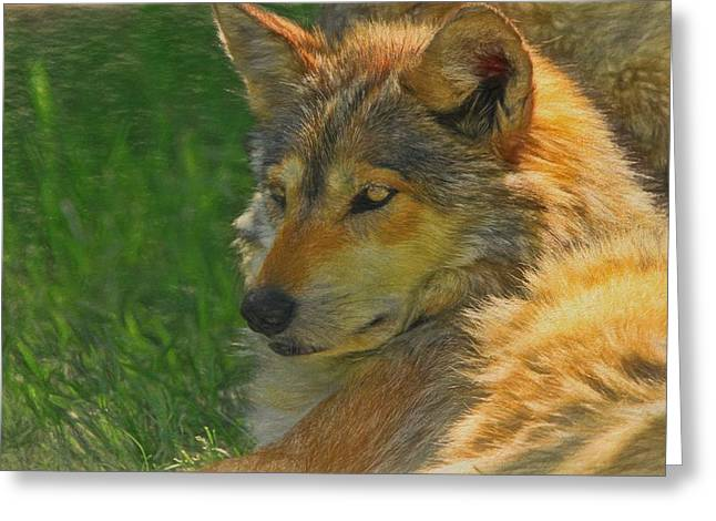 Mexican Wolf Greeting Card by Dan Sproul