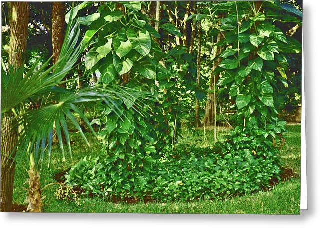 Greeting Card featuring the photograph Mexico Greenery by Tammy Sutherland
