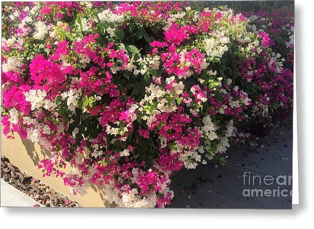 Greeting Card featuring the photograph Mexico Memories 4 by Victor K