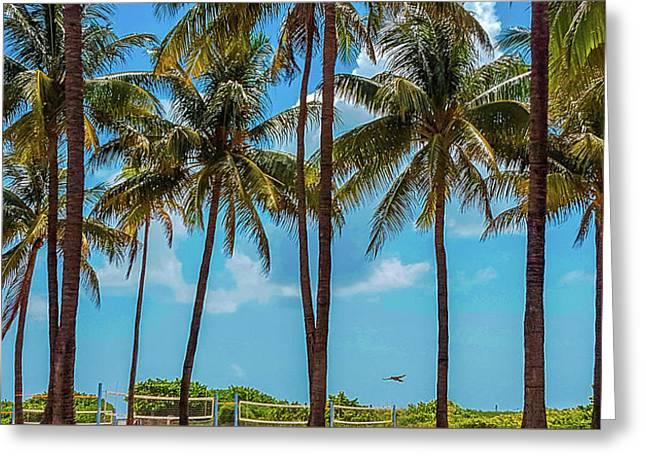 Miami Beach Palms Greeting Card