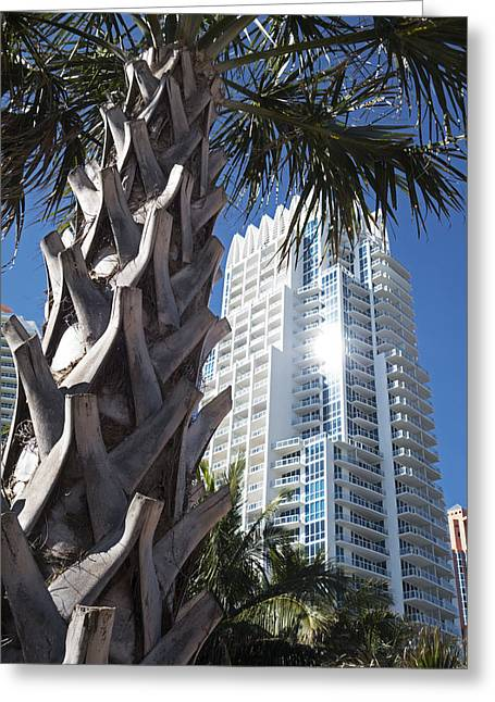 Miami Beach Skyscraper Palm Tree Greeting Card by Toby McGuire