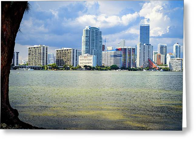Miami Greeting Card by Camille Lopez