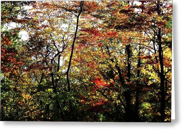 Michigan Fall Colors 11 Greeting Card