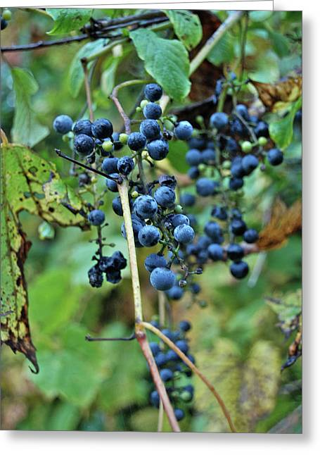 Michigan Grapes Greeting Card by Michael Peychich