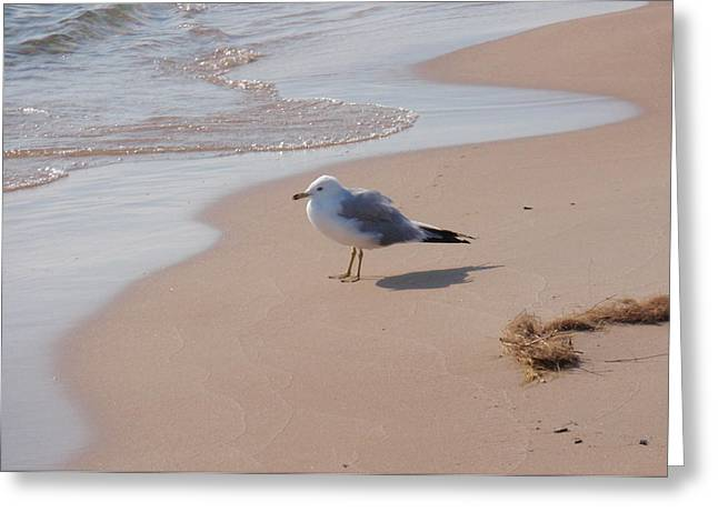 Greeting Card featuring the photograph Michigan Seagull  by Beth Akerman