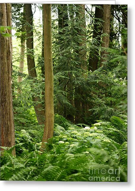 Greeting Card featuring the photograph Michigan Woods 3 by Linda Shafer