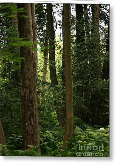 Greeting Card featuring the photograph Michigan Woods by Linda Shafer