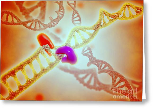 Microscopic View Of Dna Binding Greeting Card by Stocktrek Images