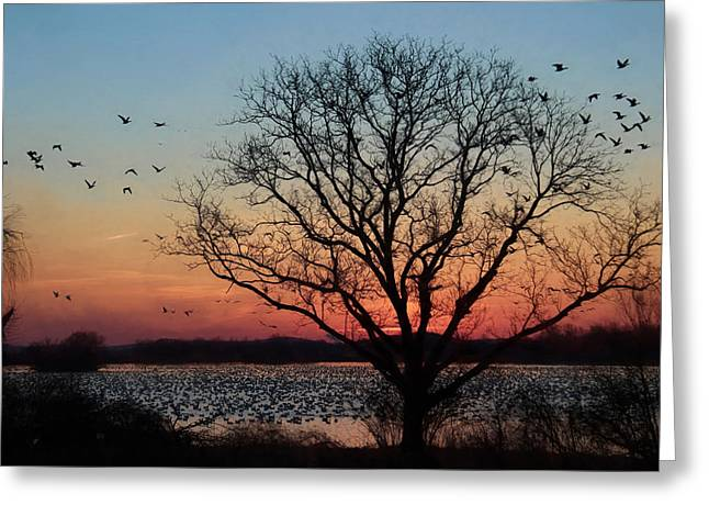 Middle Creek Sunrise 3 Greeting Card by Lori Deiter