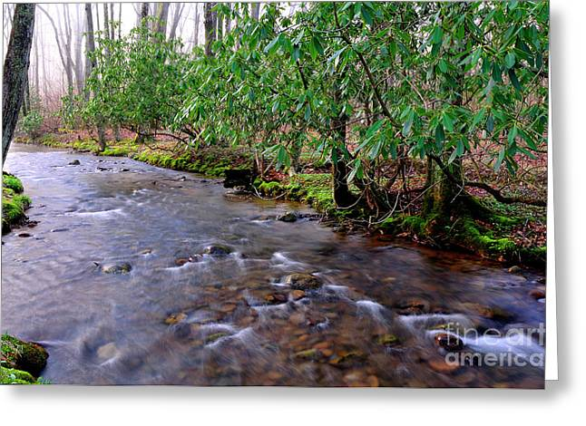 Middle Fork Mist Greeting Card by Thomas R Fletcher