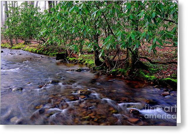 Middle Fork Morning Greeting Card by Thomas R Fletcher