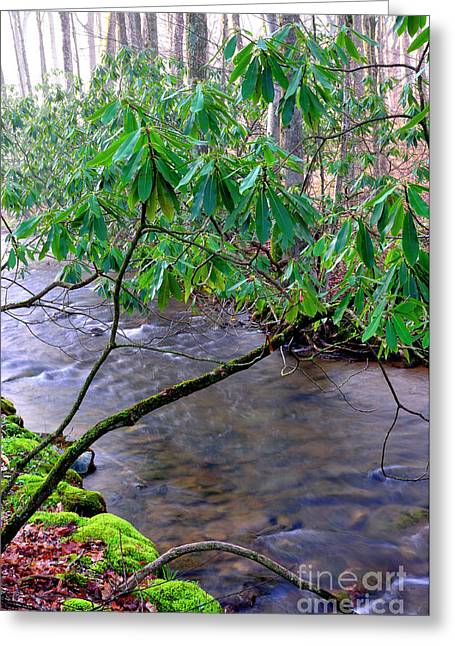 Middle Fork  Greeting Card by Thomas R Fletcher