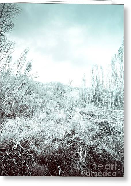 Middle Of Snowhere Greeting Card by Jorgo Photography - Wall Art Gallery