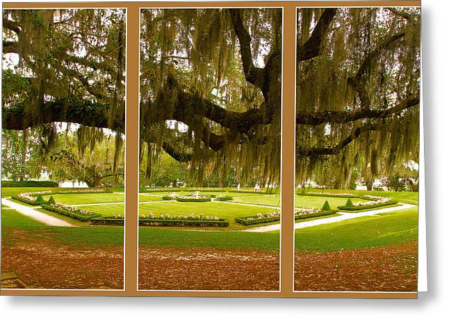 Greeting Card featuring the photograph Middleton Gardens Triptych by Bill Barber