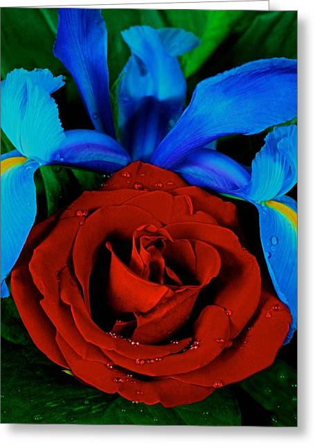 Midnight Blue Iris And A Red Rose Greeting Card by Leslie Crotty