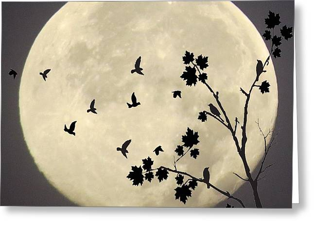 Midnight Greeting Card by FL collection