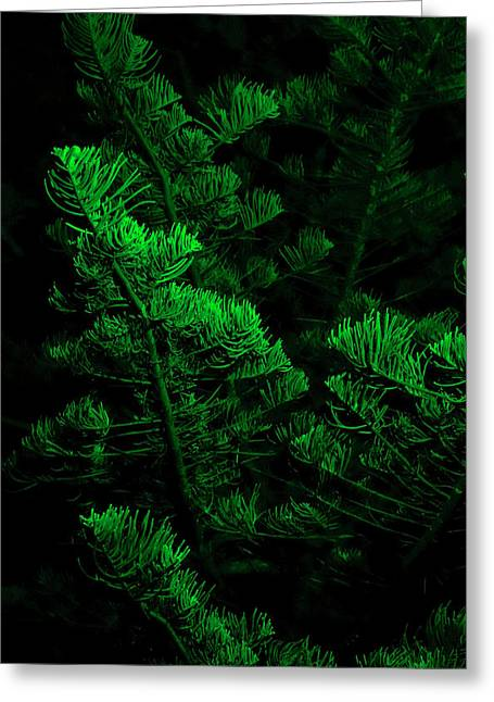 Midnight Green Greeting Card by Niel Morley
