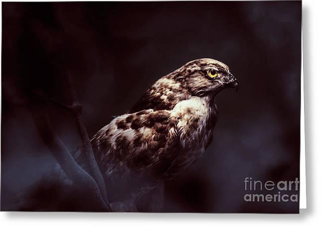 Midnight Hawk Greeting Card