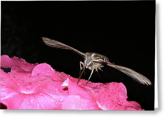 Midnight Hummer Greeting Card by Randy Rosenberger