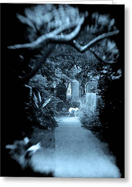Midnight In The Garden O Greeting Card