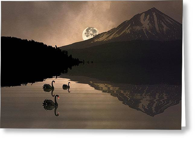 Midnight Moods Swan Lake In The Moonlight Greeting Card