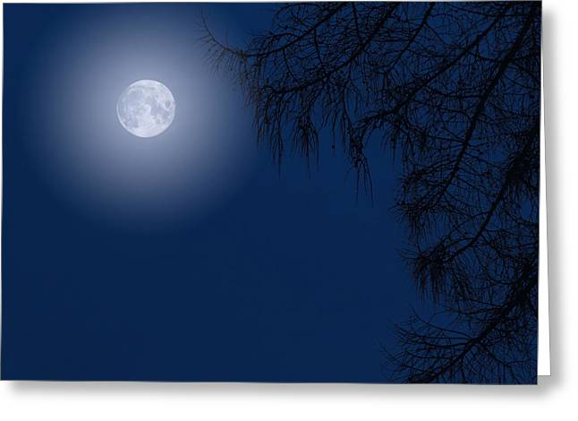 Midnight Moon And Night Tree Silhouette Greeting Card