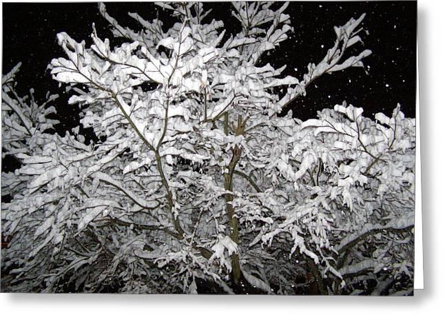 Midnight Snow 3 Greeting Card by Christine Sullivan Cuozzo