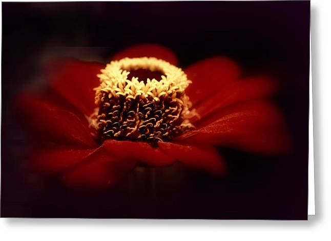 Midnight Zinnia Greeting Card
