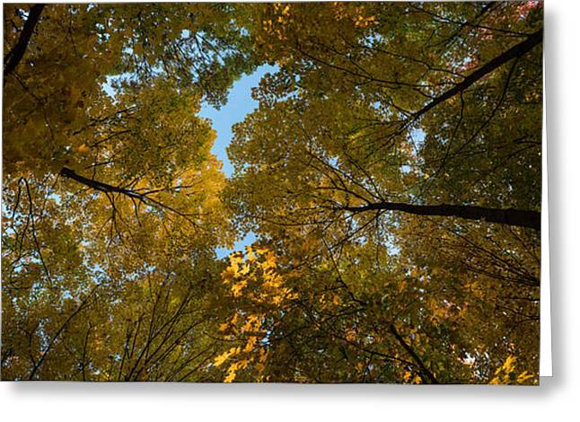 Midwest Forest Canopy Greeting Card by Steve Gadomski