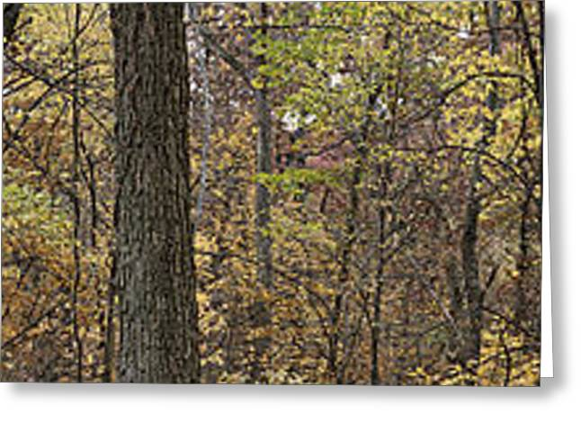 Midwest Forest Greeting Card