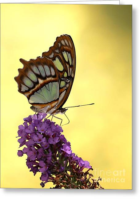 Mighty Malachite Butterfly Greeting Card