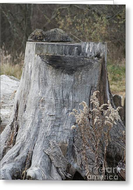 Mighty Stump Greeting Card by Rob Luzier