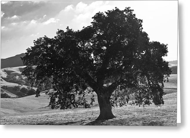 Mighty The Oak Greeting Card