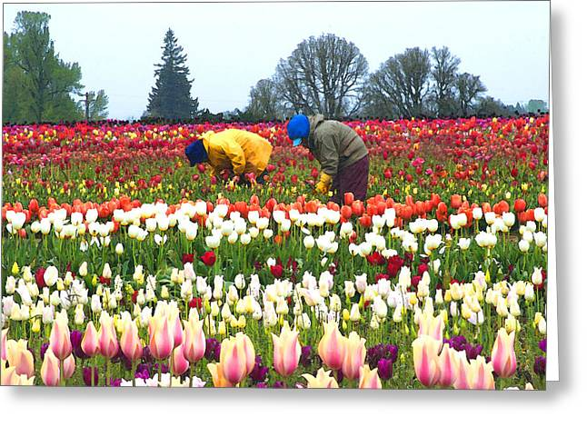 Migrant Workers In The Tulip Fields Greeting Card by Margaret Hood