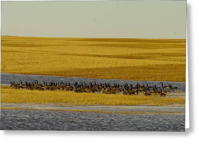 Migrating Geese Greeting Card