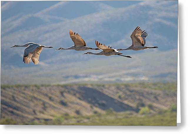 Migration Begins Greeting Card by Loree Johnson