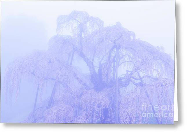 Greeting Card featuring the photograph Miharu Takizakura Weeping Cherry01 by Tatsuya Atarashi