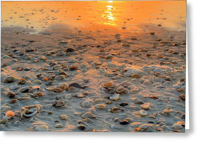 Miles Of Shells In Saint Joe State Park Greeting Card by JC Findley