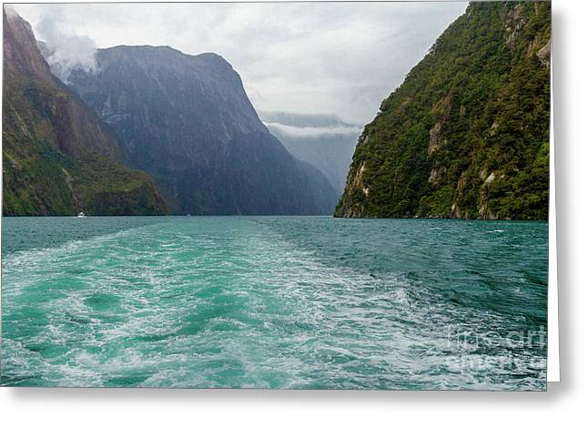 Milford Sound, New Zealand Greeting Card by Elaine Teague