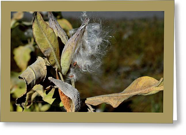 Milkweed Seeds Taking Flight Greeting Card