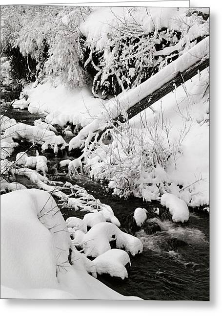 Mill Creek Canyon In Winter Greeting Card by Dennis Hammer