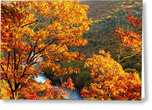 Millers River Foliage Greeting Card by John Burk