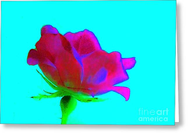 Milti Colored Rose Greeting Card by Marsha Heiken