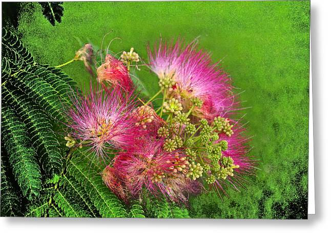 Mimosa II Greeting Card