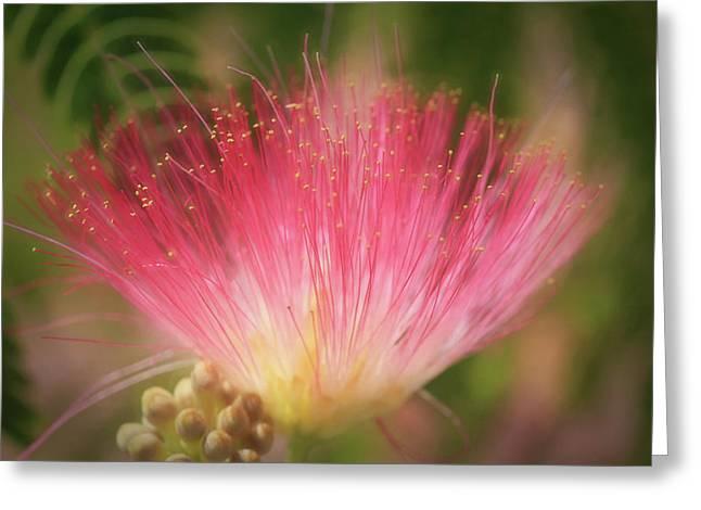 Mimosa Silk Optics Greeting Card by Donna Kennedy