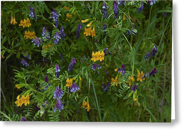 Mimulus And Vetch Greeting Card by Doug Herr