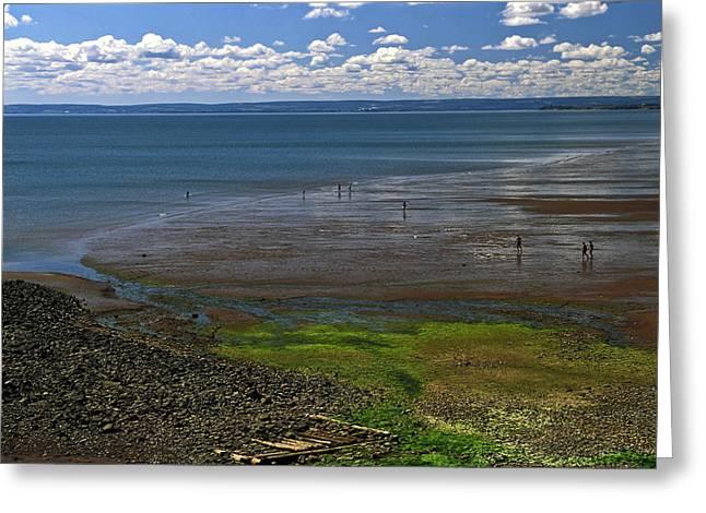 Minas Basin  Nova Scotia Greeting Card by Sally Weigand