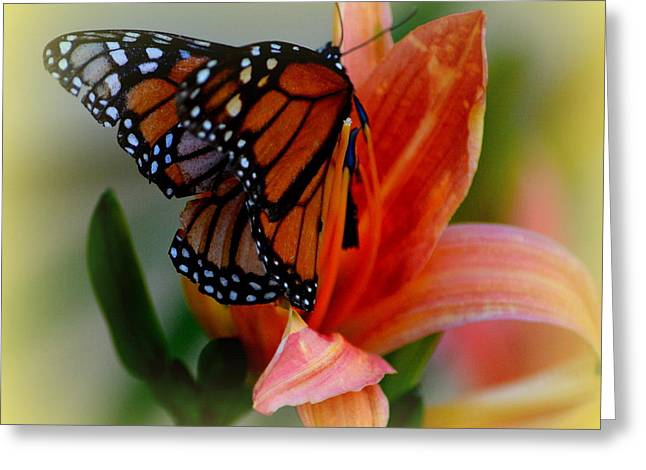 Mingle With A Monarch Greeting Card
