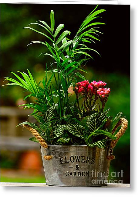Mini Garden Country Style By Kaye Menner Greeting Card by Kaye Menner